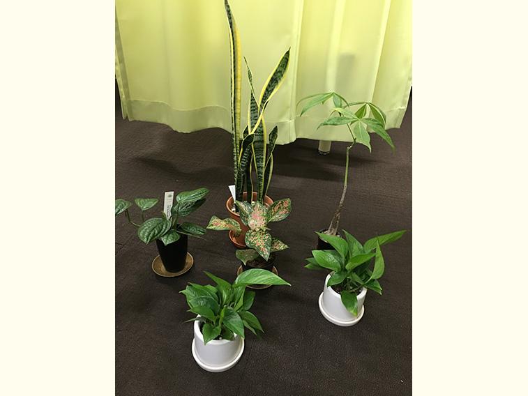 当院の観葉植物たち