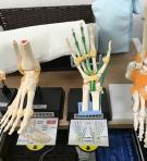 小田栄骨模型