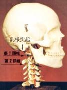 頸椎横突起触診画像